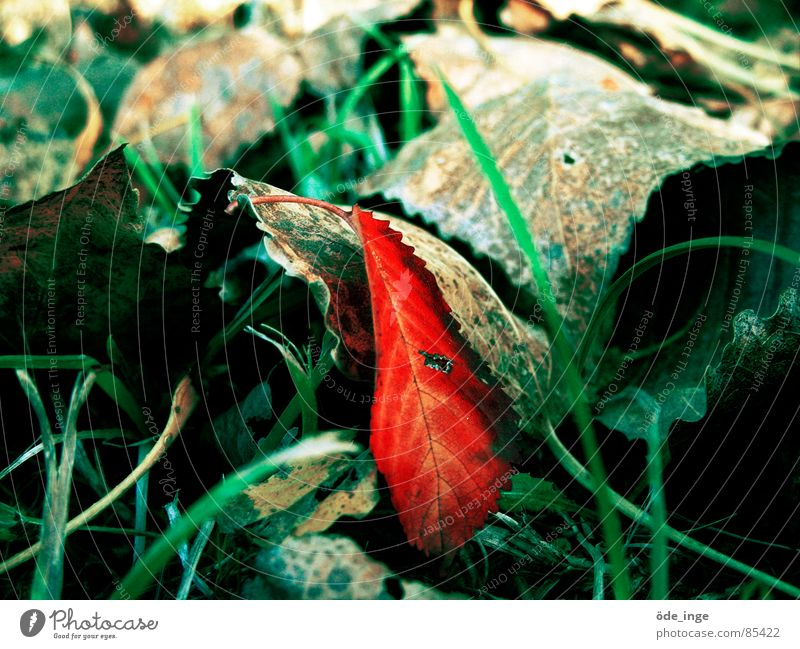Nature Beautiful Green Plant Red Leaf Loneliness Autumn Meadow Grass Gray Environment Lawn Lie Uniqueness Stalk