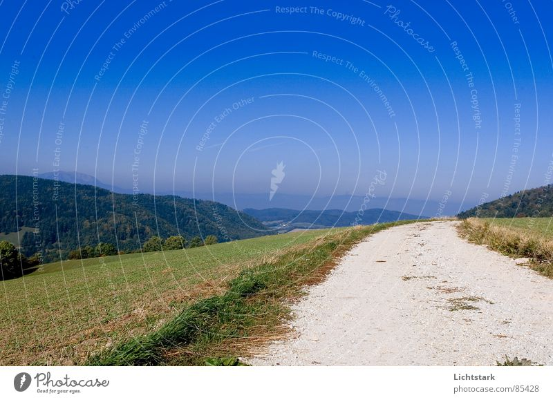 Sky Forest Meadow Lanes & trails Hill Footpath Beautiful weather Austria Blue sky Coniferous forest Glade Go off Approach road Austrian Federal State of Lower Austria