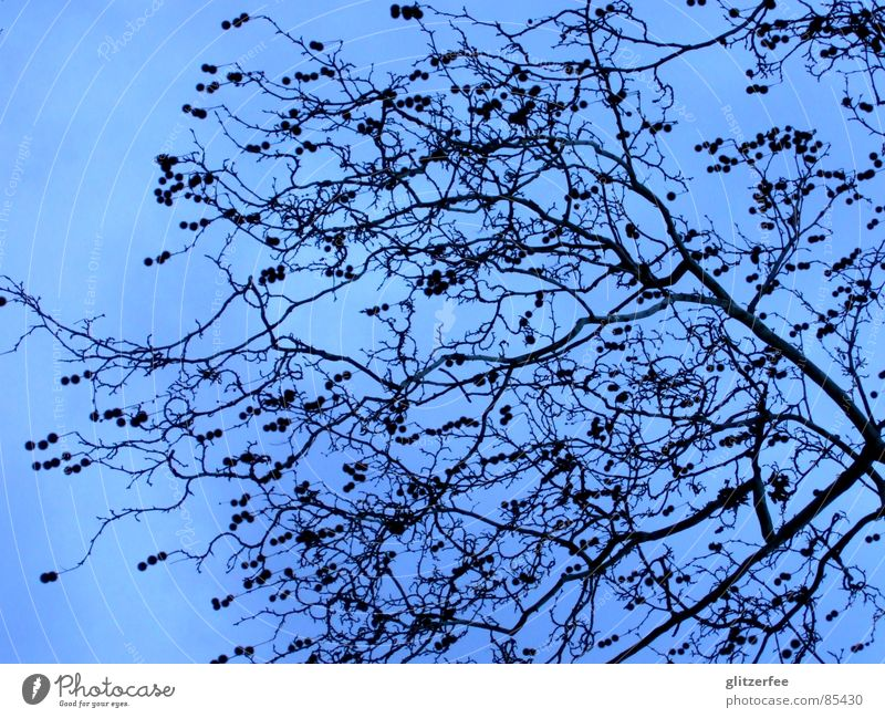 heaven in the sky Tree Spring Winter Sky Fairy Branch Sparse Calm Blue