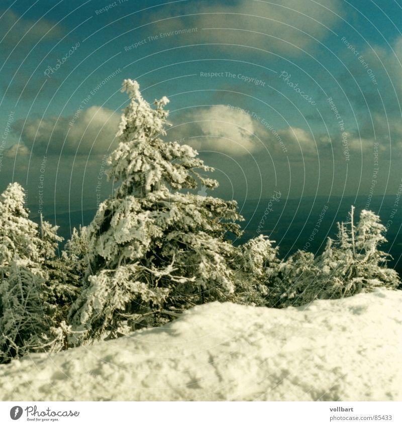 Winter Snow Fir tree December Harz Fragment Winter light