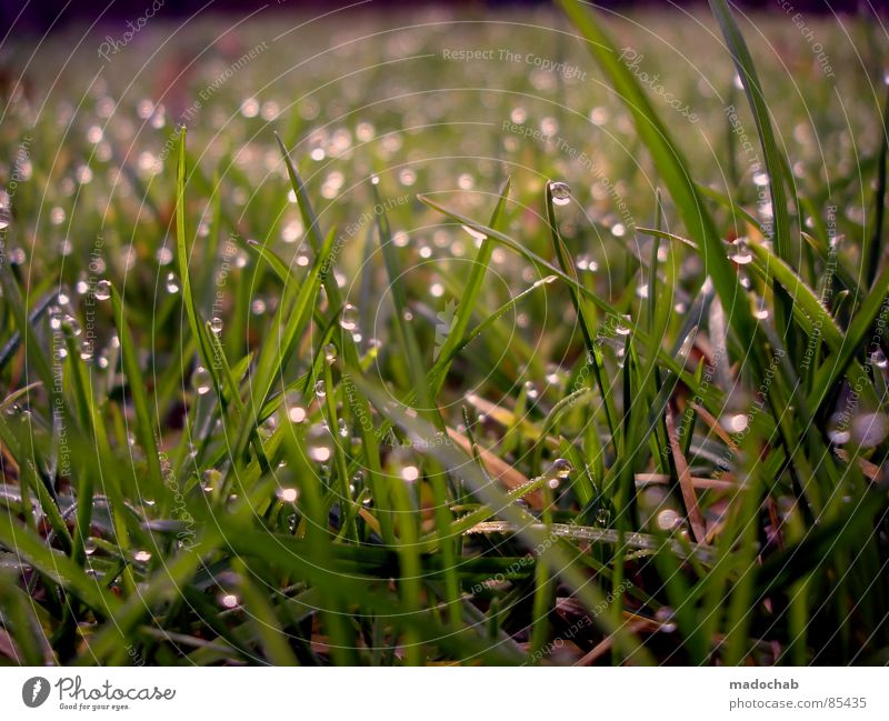 LOVELY DRIPS Glittering Dew Grass Meadow Green Wet Damp Romance Nature Playing Fairy tale Fairytale landscape Daydream Dream Jinxed Beautiful Idyll Grassland