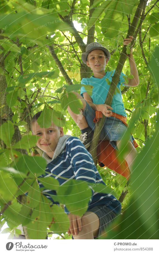 Boys looking down through leaves from the tree Trip Adventure Freedom Climbing Mountaineering Human being Masculine Child Boy (child) Brothers and sisters