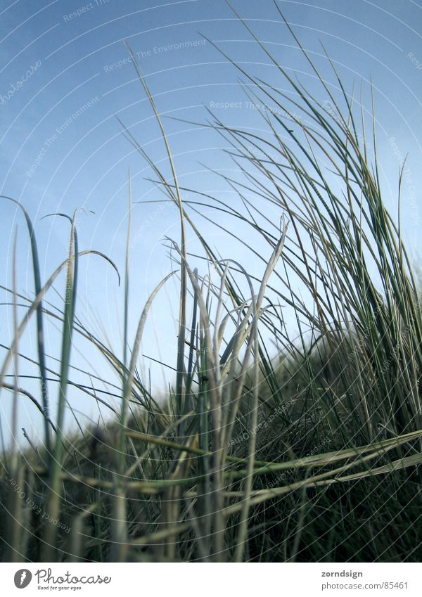 Blu Grass Blade of grass Straw Meadow Borkum Beach Coast Wind Beach dune North Sea