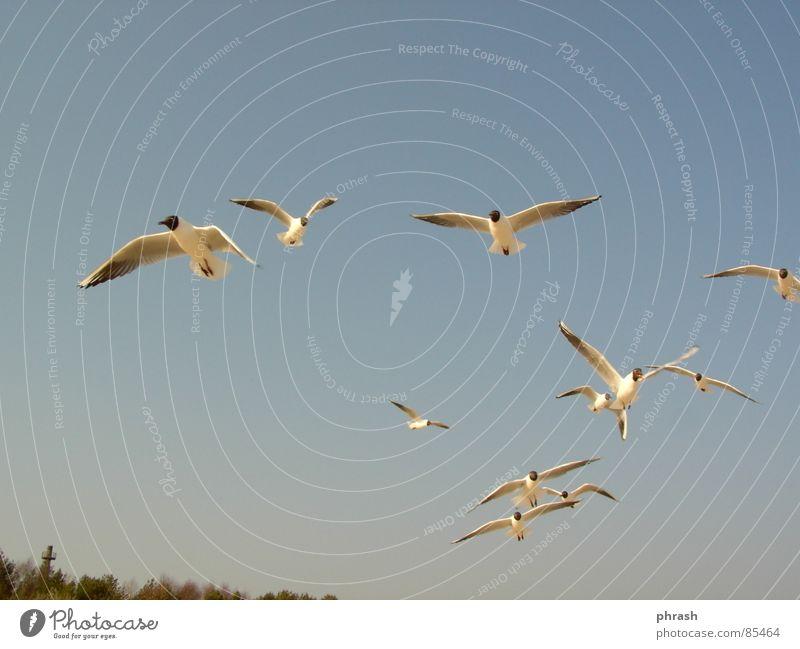 gulls Swinemünde Animal Bird Sky polish Baltic Sea seagulls Poland Freedom Firmament Canopy (sky)