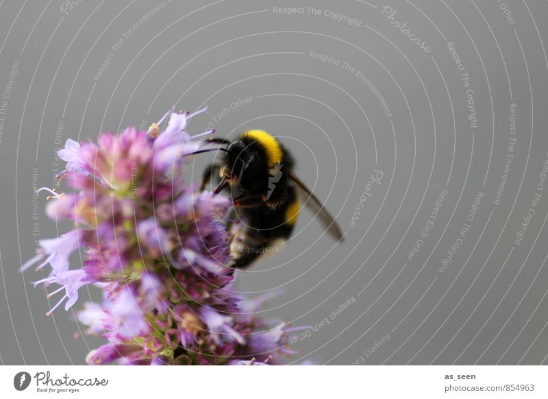 Nature Colour Animal Black Environment Yellow Natural Food Pink Contentment Wild animal Esthetic Wing Joie de vivre (Vitality) Pure Insect