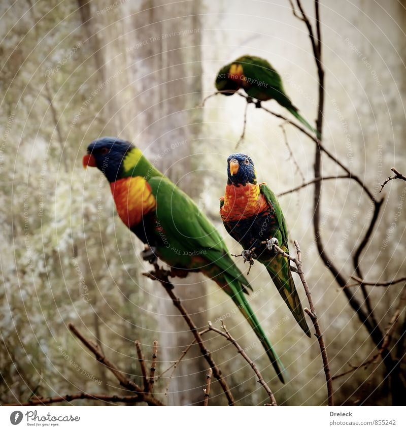 3x colored Nature Animal Bird Wing Zoo Parrots Flying Exotic Blue Multicoloured Yellow Green Orange Love of animals Colour Colour photo