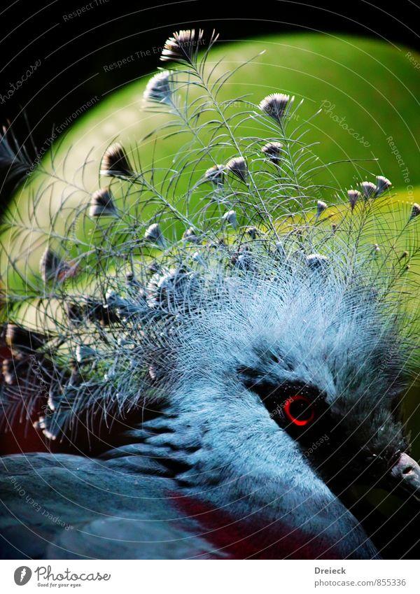 flowerpot head Animal Wild animal Bird Animal face Feather 1 Blue Green Black Silver Colour photo