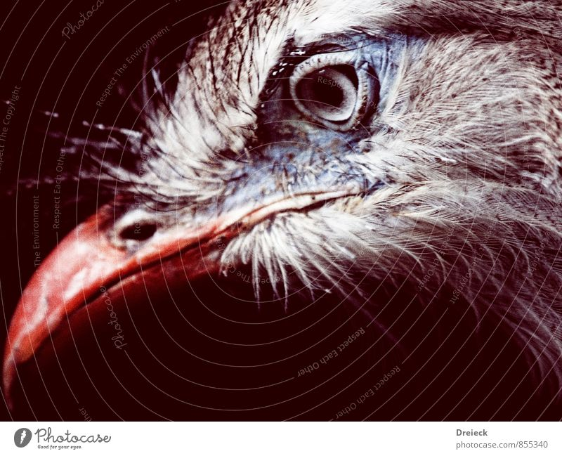 eye + beak = bird Animal Wild animal Bird Animal face Beak Eyes Feather 1 Looking Authentic Blue Brown Gray Orange Red Silver White Colour photo Animal portrait