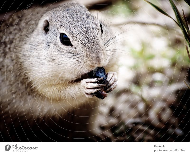 Nature Animal Environment Eating Gray Wild animal Cute Pelt Animal face Zoo Feeding Rodent Claw