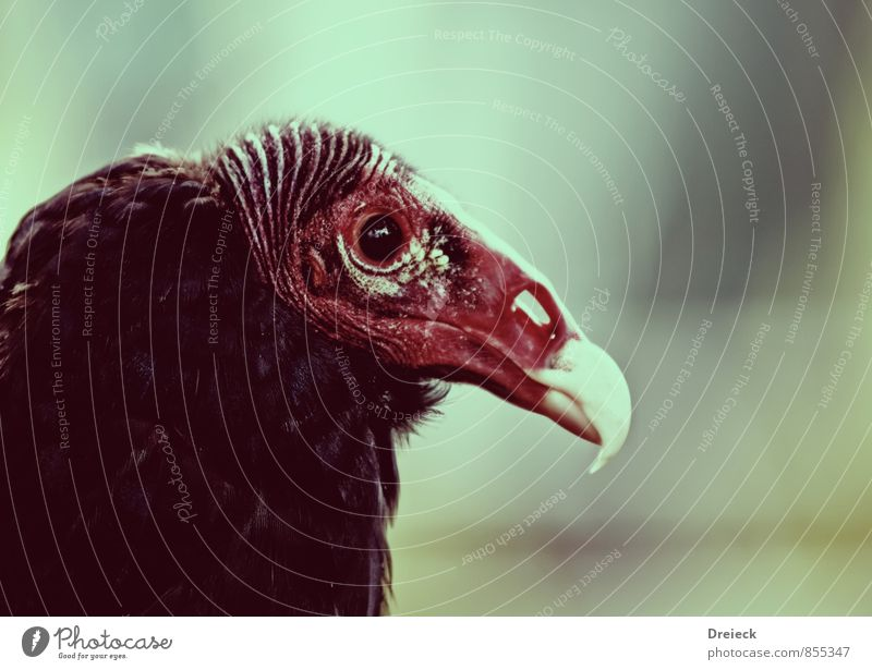 pretty boy Animal Wild animal Bird Animal face Zoo 1 Looking Hideous Brown Red White Colour photo Subdued colour Exterior shot Isolated Image Neutral Background