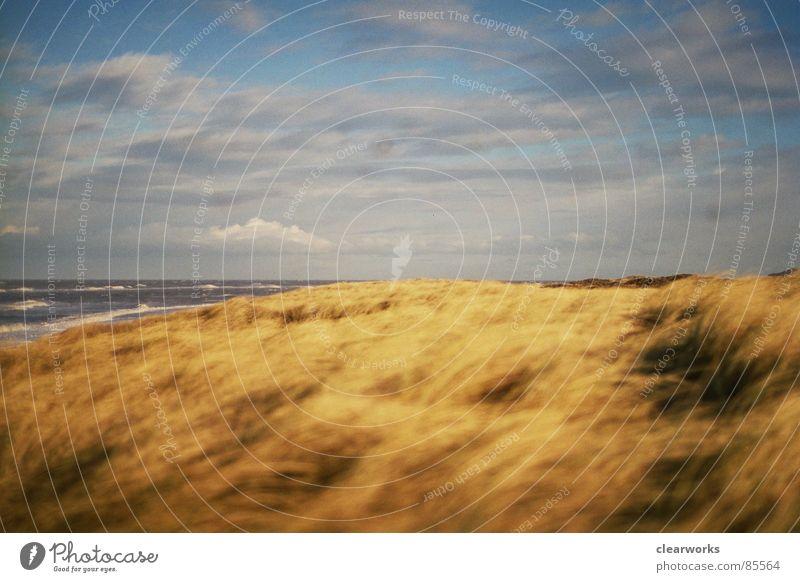 favourite place Grass Ocean Gale Lawn Beach Coast Beach dune Denmark Landscape Sky strong wind