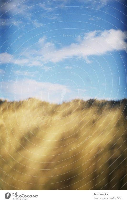 gold rush Grass Gale Grassland Lawn Shaft of light Clouds Beach Coast Beach dune Sky Denmark Gold strong wind