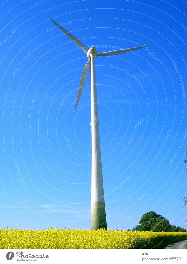 Nature Sky Summer Movement Wind Wind energy plant Canola Canola field