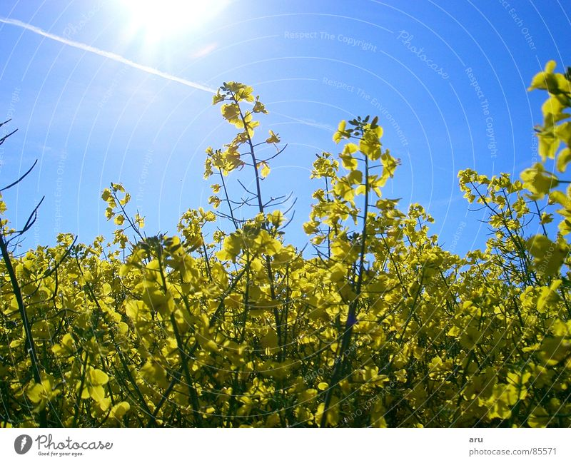 Flowers in the sunshine Sun Field Summer Meadow Nature Sky yellow leaves
