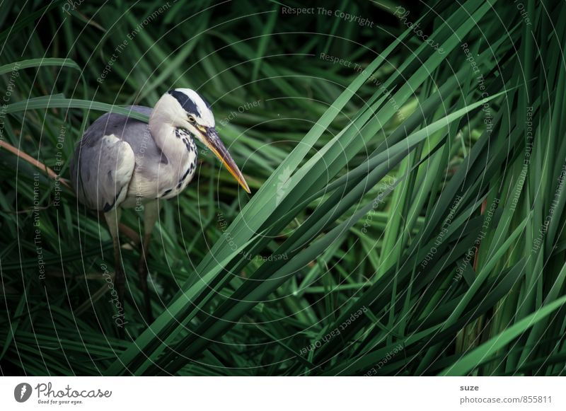 Mr Strese in Slumberland Environment Nature Landscape Animal Lakeside Wild animal Bird 1 Stand Wait Esthetic Authentic Fantastic Natural Green Mysterious Heron