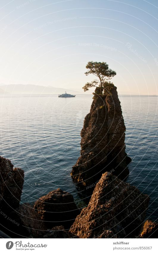 The tree and Lady Beatrice Landscape Cloudless sky Beautiful weather Tree Rock Waves Coast Bay Ocean Navigation Yacht Motorboat Esthetic Rock formation Steep