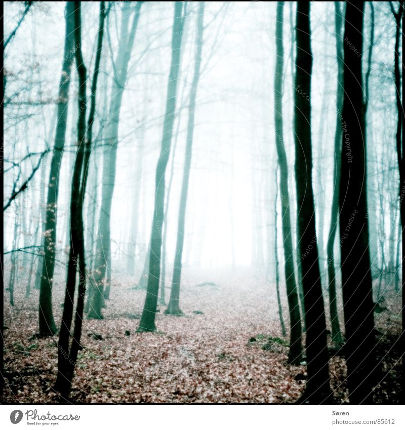 Leaf Loneliness Forest Dark Autumn Wood Sadness Fear Fog Grief To go for a walk Distress Doomed Panic Concern Badlands