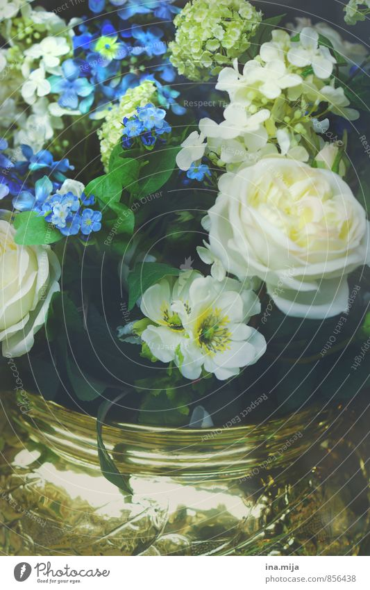 Nature Blue Plant Beautiful White Flower Environment Style Glittering Elegant Gold Decoration Might Kitsch Rose