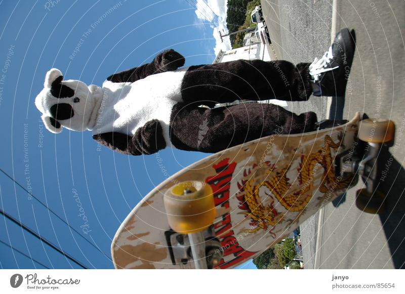 skateboarder Panda Skateboarding Sports Youth culture Funsport fun Carnival costume