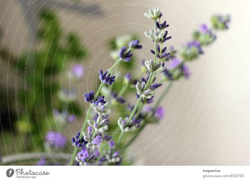 Nature Plant Beautiful Summer Relaxation Flower Calm Environment Life Healthy Health care Contentment Fitness Wellness Well-being Personal hygiene