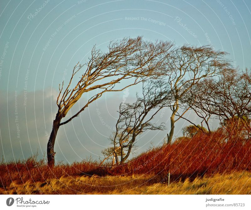 Nature Beautiful Sky Green Winter Beach Forest Autumn Meadow Grass Landscape Coast Tree Wind Bushes Passion