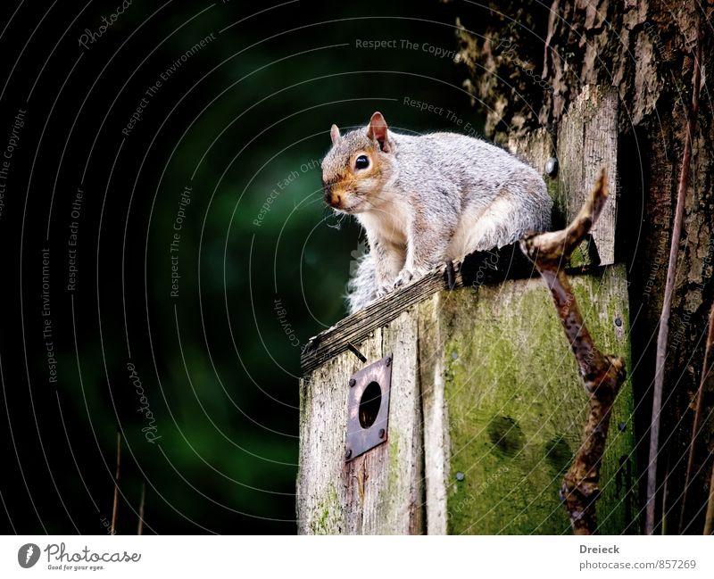 Let's wait and see Animal Animal face Squirrel 1 Wood Wait Cute Above Brown Green White Colour photo Exterior shot Day