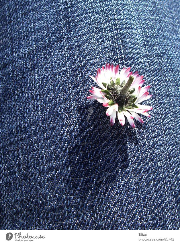 Flower Plant Summer Calm Life Death Spring Dream Sadness Legs Fear Pink Clothing Sleep Speed