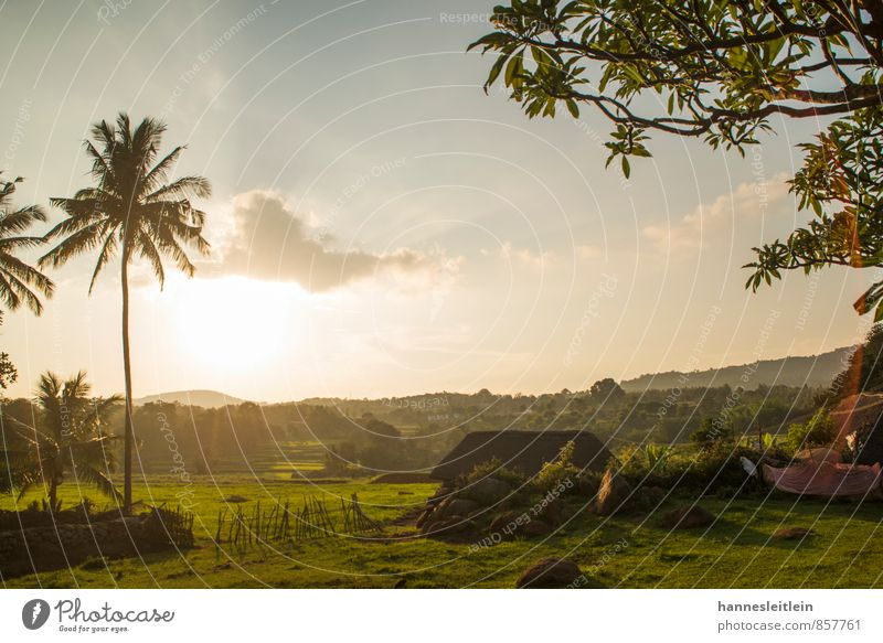 Tree Landscape House (Residential Structure) Horizon Field Poverty Village Palm tree India Modest
