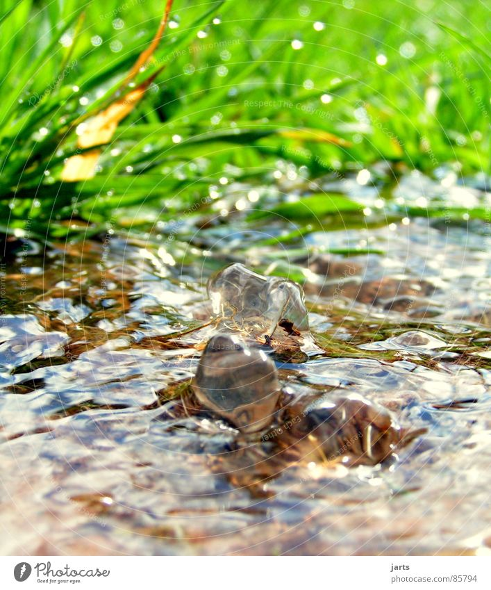 Nature Water Green Meadow Grass Healthy Fresh Clean Clarity Brook Refreshment Source Primordial Born