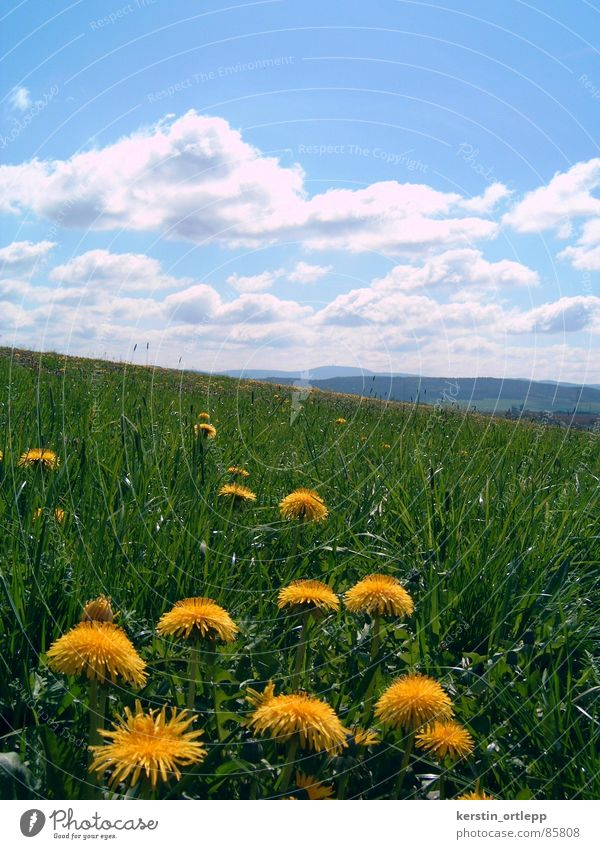 View to the Inselsberg Meadow Clouds Spring Flower Dandelion Mountain Landscape