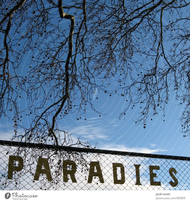 Paradise: located Style Culture Clouds Winter Twigs and branches Garden Garden allotments Lichtenberg Dream Simple Happy Positive Retro Gloomy Blue Moody