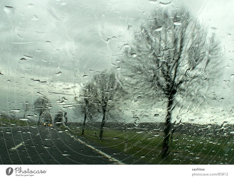 Autumn Rain Road traffic Weather Wet Perspective Thunder and lightning Motoring Avenue Puddle Vista Hazy Roadside Country road Windscreen Car driver