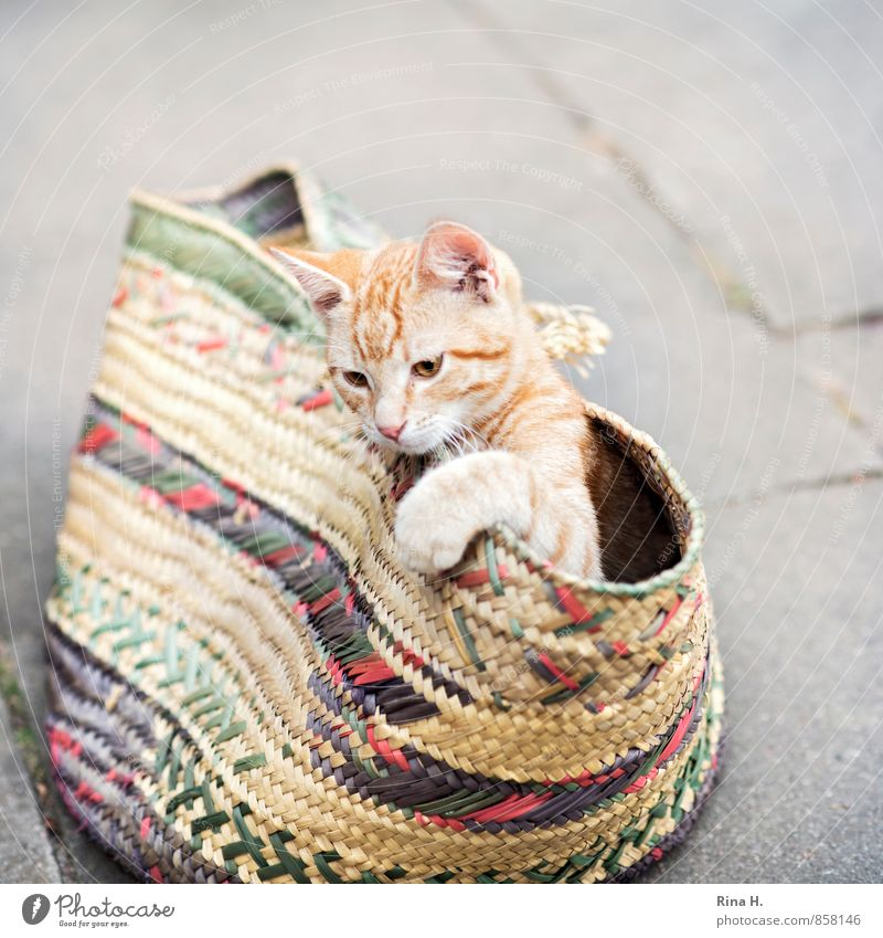 Cat in a bag Baby animal Playing Cute Hide Bag Shopping bag Concrete slab Exterior shot Copy Space top Copy Space bottom Shallow depth of field Bird's-eye view