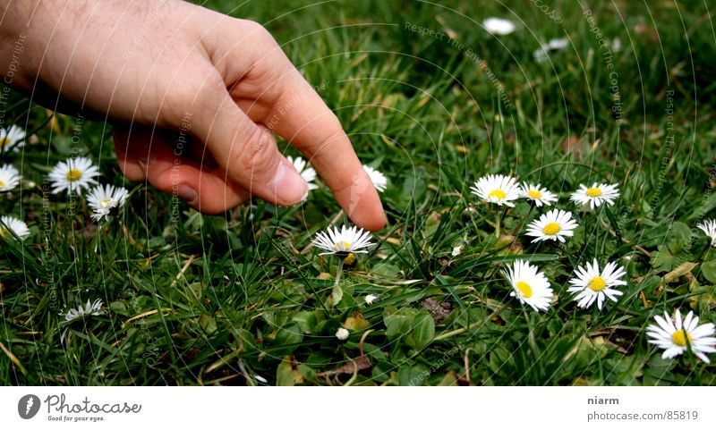 Nature Hand Green Beautiful Flower Meadow Spring Grass Blossom Fingers Stripe Beautiful weather Lawn Touch Kitsch Contact