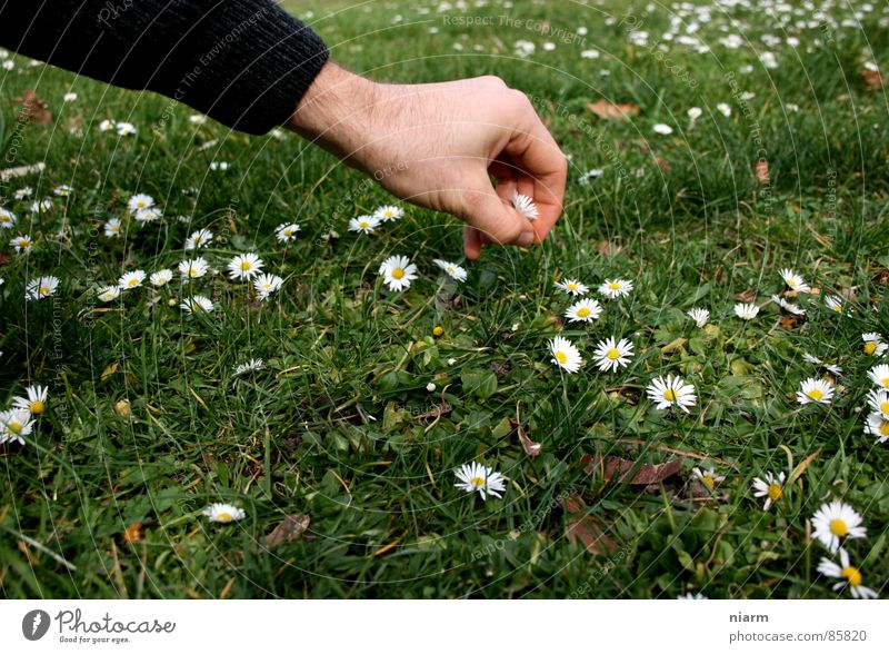 Nature Hand Green Beautiful Flower Meadow Spring Grass Blossom Stripe Beautiful weather Lawn Touch Kitsch Contact Bouquet