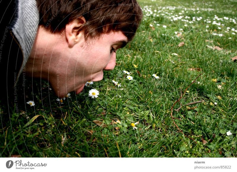 Nature Green Beautiful Flower Meadow Grass Spring Blossom Mouth Crazy Stripe Beautiful weather Lawn Contact Kitsch Pasture