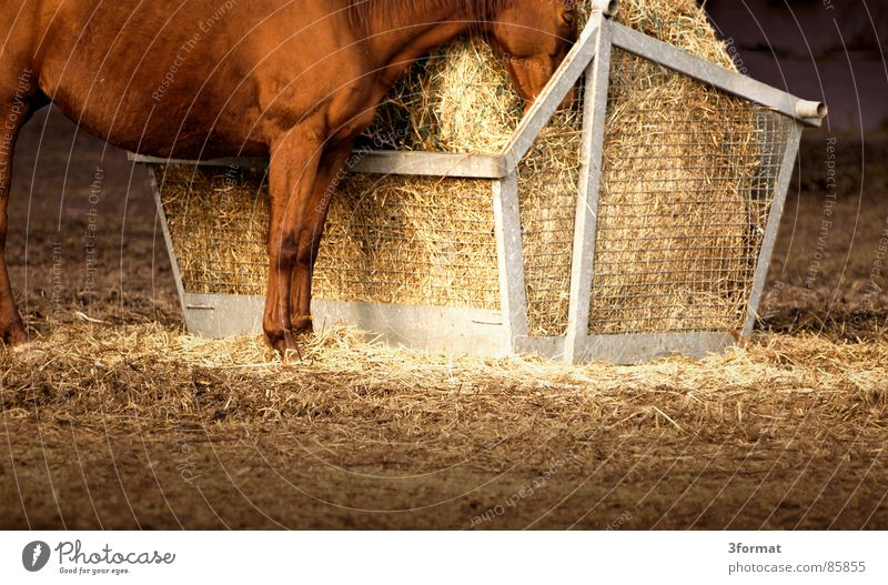 Horse Stand Pasture To feed Mammal Stay Feed Straw