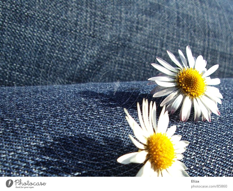 Beautiful Summer Flower Playing Blossom Happy Spring Happiness Sweet Cute Jeans Pants Daisy Thigh Cheerful