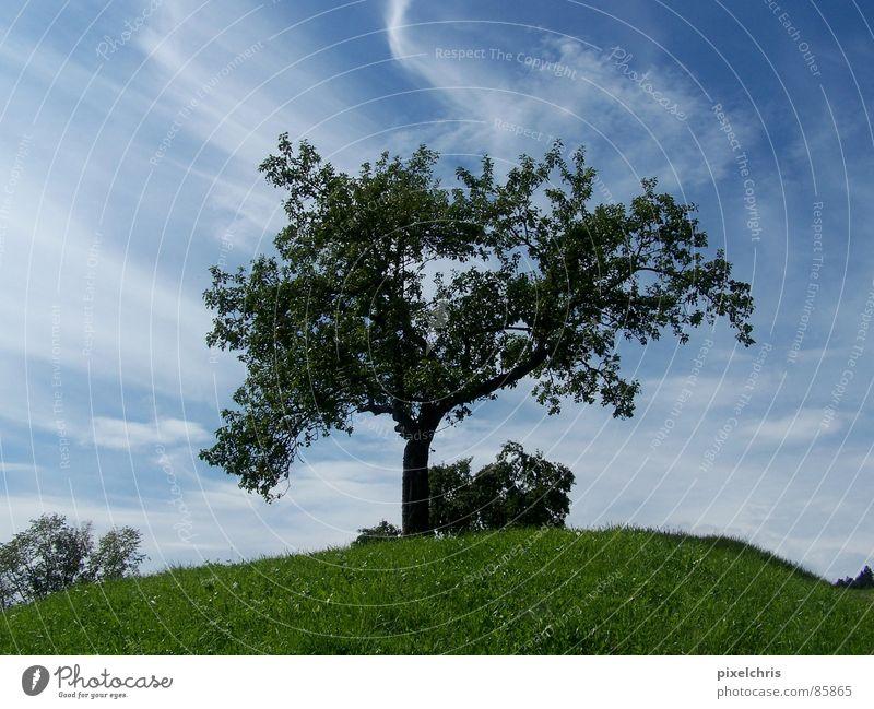 dynamism Cirrus Green Meadow Summer Deciduous tree Clouds Grass vista Landscape Sky Nature cirrostratus clouds Dynamics Lawn