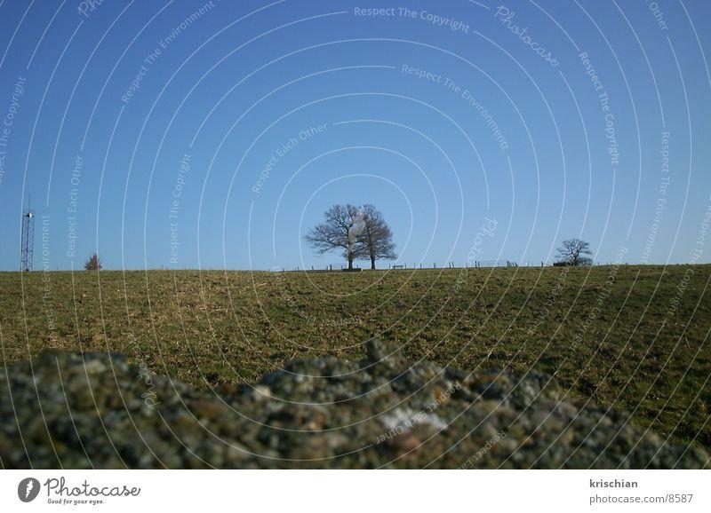 Nature Tree Landscape