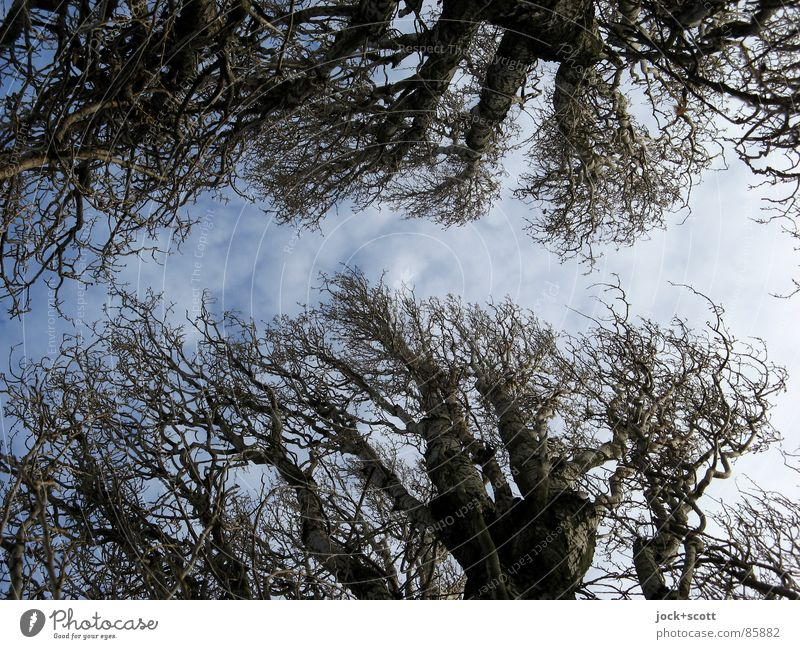 Sky Nature Old Wood Line Weather Arrangement Power Wind Point Branch Tree trunk Twig Fat Botany Year