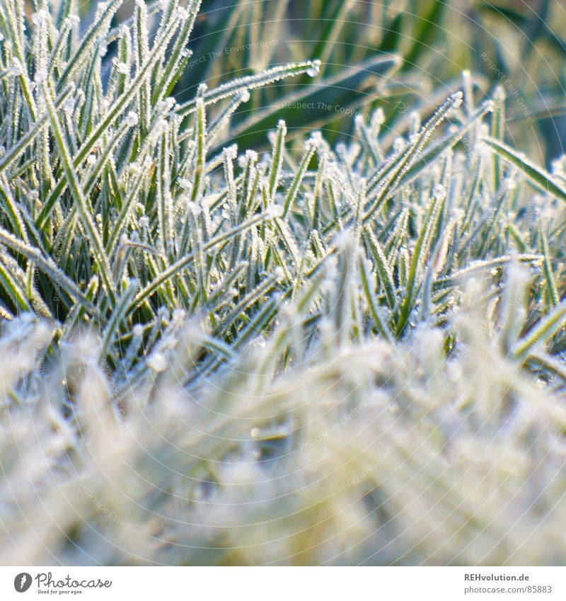 frozen grass Arise Meadow Grass Freeze Green Cold Morning Hoar frost Ice Winter Garden Park freezing point cold. stalks Lawn Frost dress warm xxee Snow