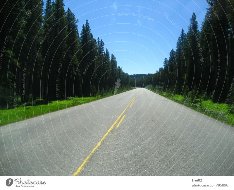Street Forest Road traffic Highway Traffic infrastructure Pavement Tar Country road Freeway