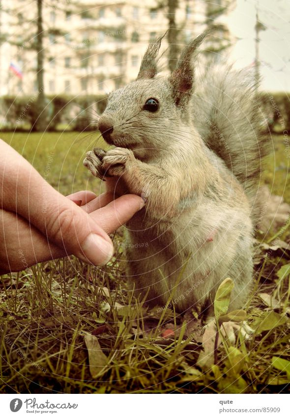 squirrels Squirrel Hand Animal Mammal squarrel Feh eating grass ground cute