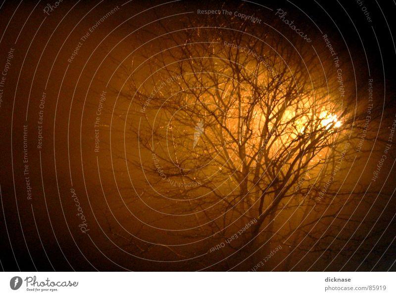 glow on me... Recently Tree Back-light Fog Glow Branched Night Long exposure Exposure Coburg Franconia Beautiful Weekend times 1 confirmed yeahhhhh Smoke mado