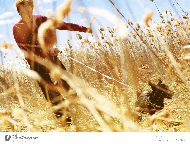 The chase Young lady Ear of corn Field Joy dog cereals fun
