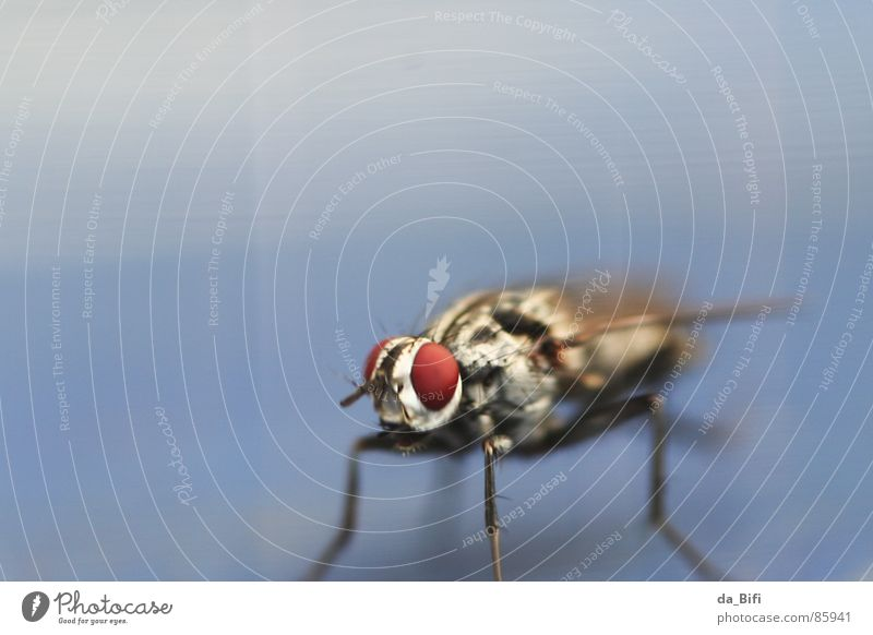 Nature Red Animal Eyes Small Legs Flying Exceptional Large Stripe Wing Near Long Insect