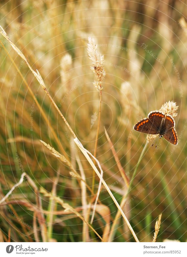Nature Green Summer Animal Environment Meadow Autumn Spring Small Brown Field Flying Pasture Butterfly Sunbathing Easy