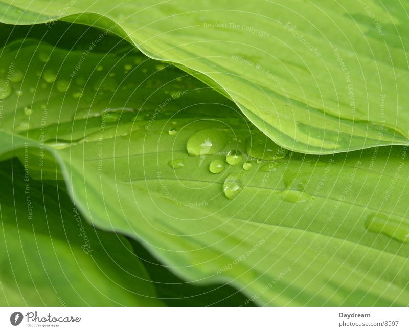 Water Green Leaf Rain Bushes