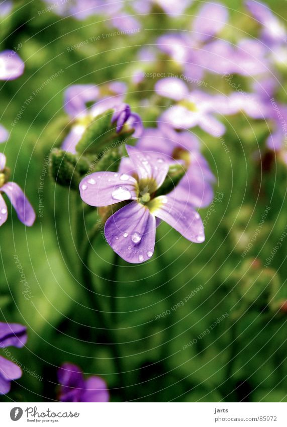Nature Beautiful Flower Meadow Blossom Garden Small Drops of water Violet Wonder